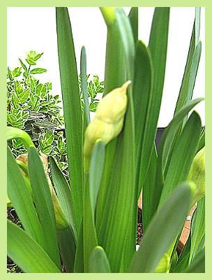 Blumen_001.jpg