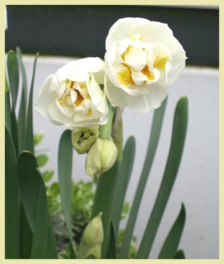 Blumen_offen_001.jpg