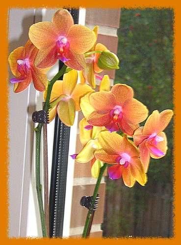 Orchidee_002.jpg